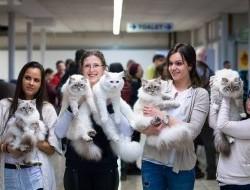 Nemzetközi Macskakiállítás Fehérváron